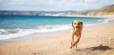dog running beach