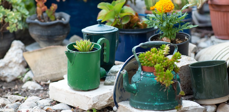garden plants teapots