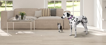 Dalmatian and cat standing in a living room