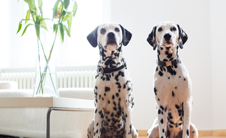 Two dalmatians sat side by side with a plant behind them