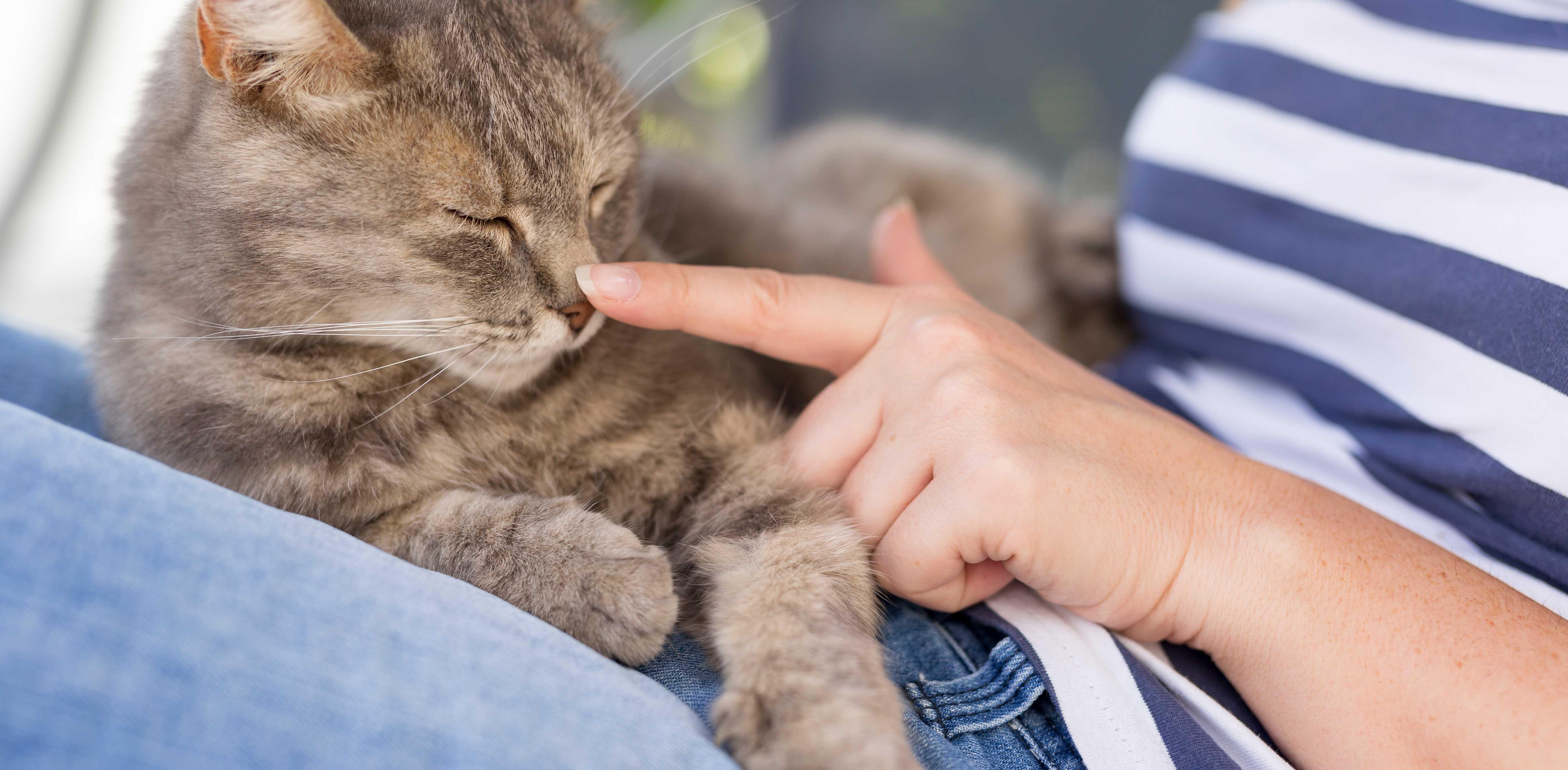 woman stroking cat