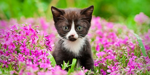 black and white kitten purple flowers