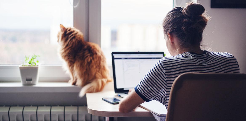 woman laptop home cat