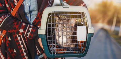 grey cat carrier winter