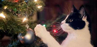 white black cat christmas tree bauble