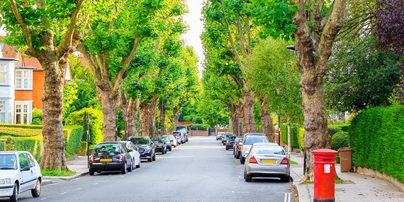 cars parked trees residential street
